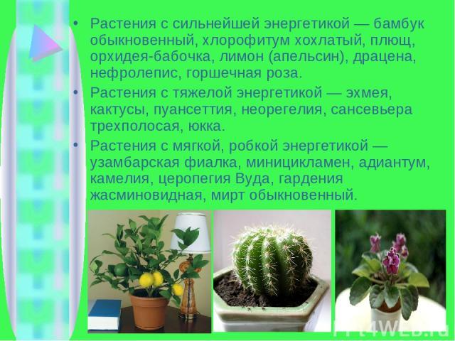 Растения с сильнейшей энергетикой — бамбук обыкновенный, хлорофитум хохлатый, плющ, орхидея-бабочка, лимон (апельсин), драцена, нефролепис, горшечная роза. Растения с тяжелой энергетикой — эхмея, кактусы, пуансеттия, неорегелия, сансевьера трехполос…
