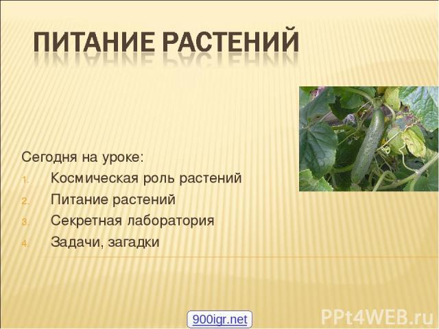 Сегодня на уроке: Космическая роль растений Питание растений Секретная лаборатория Задачи, загадки 900igr.net