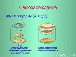 Самозарождение Опыт с сосудами (Ф. Реди): Мухи откладывают яйца, из которых позж