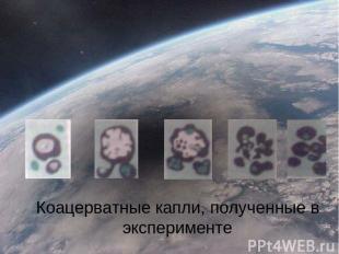Коацерватные капли, полученные в эксперименте