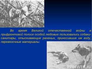 Во время Великой отечественной войны в прифронтовой полосе особой любовью пользо