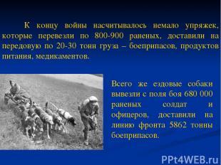 К концу войны насчитывалось немало упряжек, которые перевезли по 800-900 раненых