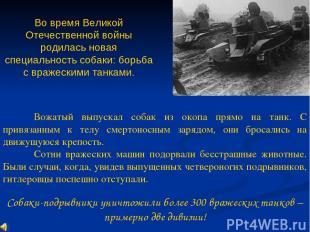 Во время Великой Отечественной войны родилась новая специальность собаки: борьба
