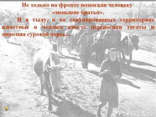 Не только на фронте помогали человеку «меньшие братья». И в тылу, и на оккупиров