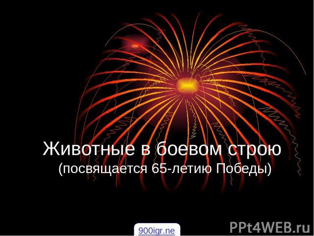 Животные в боевом строю (посвящается 65-летию Победы) 900igr.net