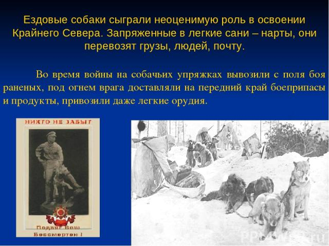 Ездовые собаки сыграли неоценимую роль в освоении Крайнего Севера. Запряженные в легкие сани – нарты, они перевозят грузы, людей, почту. Во время войны на собачьих упряжках вывозили с поля боя раненых, под огнем врага доставляли на передний край бое…
