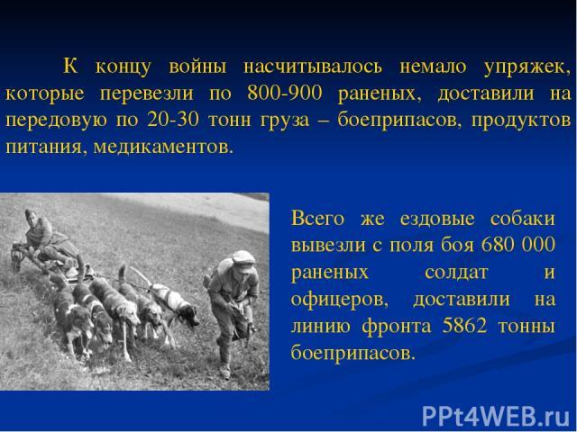 К концу войны насчитывалось немало упряжек, которые перевезли по 800-900 раненых, доставили на передовую по 20-30 тонн груза – боеприпасов, продуктов питания, медикаментов. Всего же ездовые собаки вывезли с поля боя 680 000 раненых солдат и офицеров…