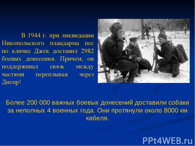Более 200 000 важных боевых донесений доставили собаки за неполных 4 военных года. Они протянули около 8000 км кабеля. В 1944 г. при ликвидации Никопольского плацдарма пес по кличке Джек доставил 2982 боевых донесения. Причем, он поддерживал связь м…