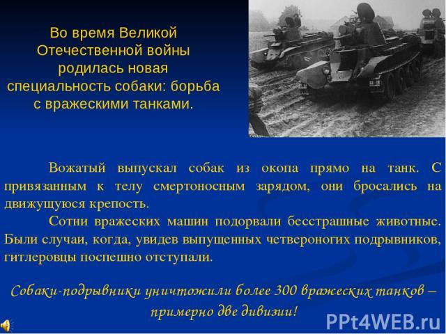 Во время Великой Отечественной войны родилась новая специальность собаки: борьба с вражескими танками. Вожатый выпускал собак из окопа прямо на танк. С привязанным к телу смертоносным зарядом, они бросались на движущуюся крепость. Сотни вражеских ма…