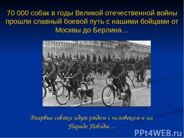 Впервые собаки идут рядом с человеком и на Параде Победы… 70 000 собак в годы Великой отечественной войны прошли славный боевой путь с нашими бойцами от Москвы до Берлина…