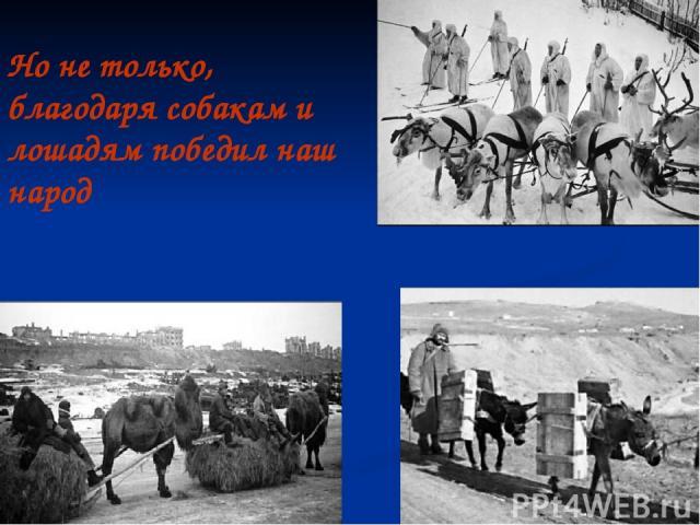 Но не только, благодаря собакам и лошадям победил наш народ