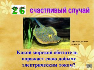 Какой морской обитатель поражает свою добычу электрическим током? Щелкни мышью п