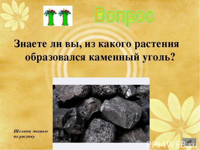 Знаете ли вы, из какого растения образовался каменный уголь? Щелкни мышью по рисунку