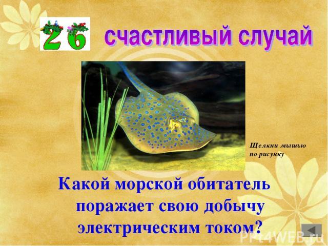 Какой морской обитатель поражает свою добычу электрическим током? Щелкни мышью по рисунку