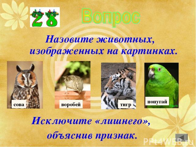 Назовите животных, изображенных на картинках. Исключите «лишнего», объяснив признак. сова воробей тигр попугай