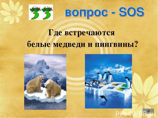Где встречаются белые медведи и пингвины?