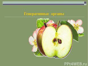 Генеративные органы