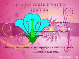 Оплодотворение – это процесс слияния двух половых клеток. * Косогова Ю.И., учите