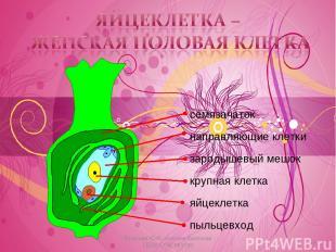 * Косогова Ю.И., учитель биологии ГБОУ СОШ №1130 Косогова Ю.И., учитель биологии