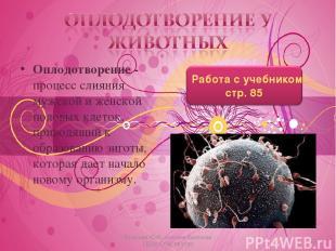 Оплодотворение - процесс слияния мужской и женской половых клеток, приводящий к