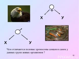 * Х У Х У Чем отличаются половые хромосомы самцов и самок у данных групп живых о