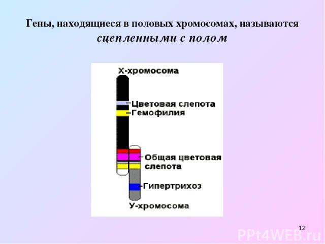 * Гены, находящиеся в половых хромосомах, называются сцепленными с полом