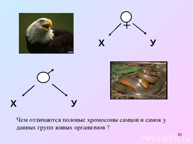 * Х У Х У Чем отличаются половые хромосомы самцов и самок у данных групп живых организмов ?