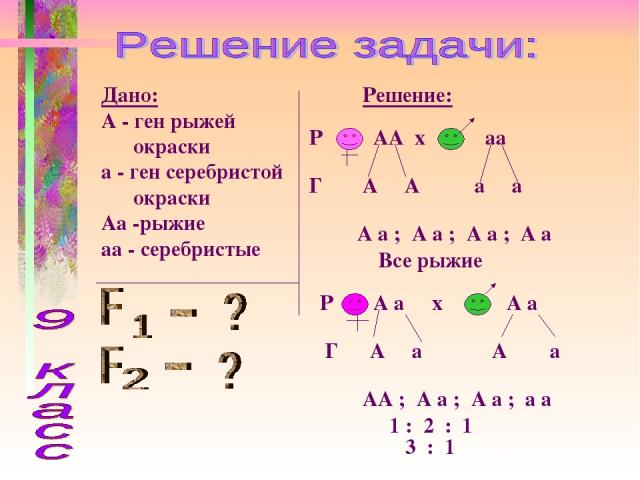 Дано: А - ген рыжей окраски а - ген серебристой окраски Аа -рыжие аа - серебристые Решение: Р АА х аа Г А А а а А а ; А а ; А а ; А а Все рыжие Р А а х А а Г А а А а АА ; А а ; А а ; а а 1 : 2 : 1 3 : 1