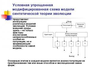 Условная упрощенная модифицированная схема модели синтетической теории эволюции