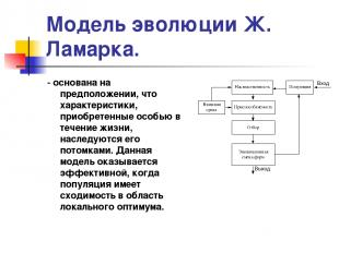 Модель эволюции Ж. Ламарка. - основана на предположении, что характеристики, при