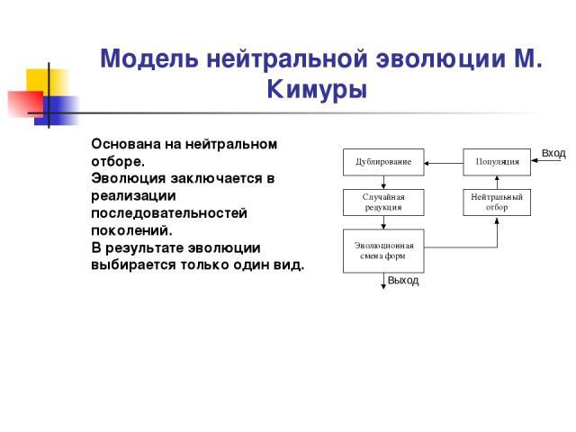 Модель нейтральной эволюции М. Кимуры Основана на нейтральном отборе. Эволюция заключается в реализации последовательностей поколений. В результате эволюции выбирается только один вид.