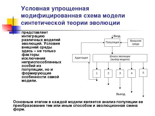 Условная упрощенная модифицированная схема модели синтетической теории эволюции представляет интеграцию различных моделей эволюций. Условия внешней среды здесь – не только факторы исключения неприспособленных особей из популяции, но и формирующие ос…