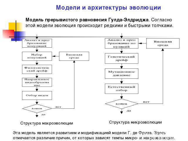Модель прерывистого равновесия Гулда-Элдриджа. Согласно этой модели эволюция происходит редкими и быстрыми толчками. Модели и архитектуры эволюции Структура макроэволюции Структура микроэволюции Эта модель является развитием и модификацией модели Г.…