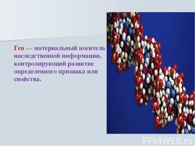 Ген — материальный носитель наследственной информации, контролирующий развитие определенного признака или свойства.