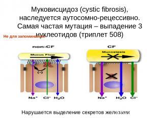 Муковисцидоз (cystic fibrosis), наследуется аутосомно-рецессивно. Самая частая м