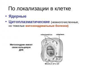 По локализации в клетке Ядерные Цитоплазматические (немногочисленные, но тяжелые
