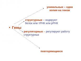 Гены структурные – кодируют белок или тРНК или рРНК регуляторные – регулируют ра