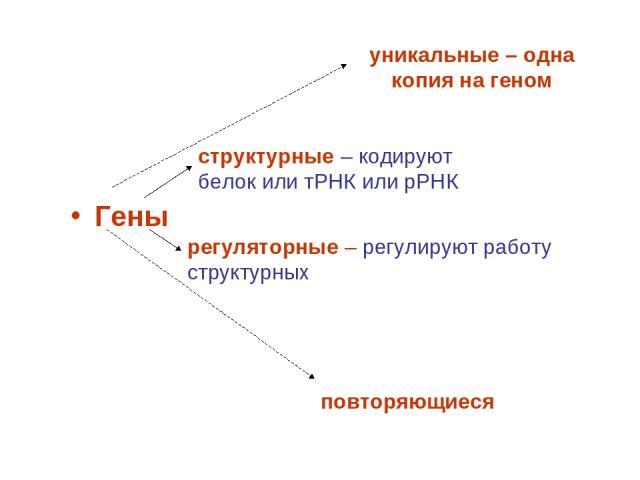 Гены структурные – кодируют белок или тРНК или рРНК регуляторные – регулируют работу структурных уникальные – одна копия на геном повторяющиеся