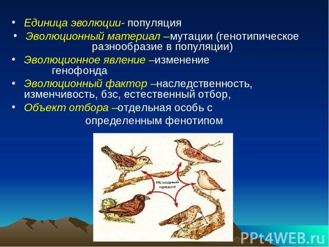 Единица эволюции- популяция Эволюционный материал –мутации (генотипическое разнообразие в популяции) Эволюционное явление –изменение генофонда Эволюционный фактор –наследственность, изменчивость, бзс, естественный отбор, Объект отбора –отдельная осо…