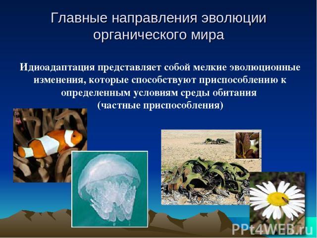 Идиоадаптация представляет собой мелкие эволюционные изменения, которые способствуют приспособлению к определенным условиям среды обитания (частные приспособления) Главные направления эволюции органического мира