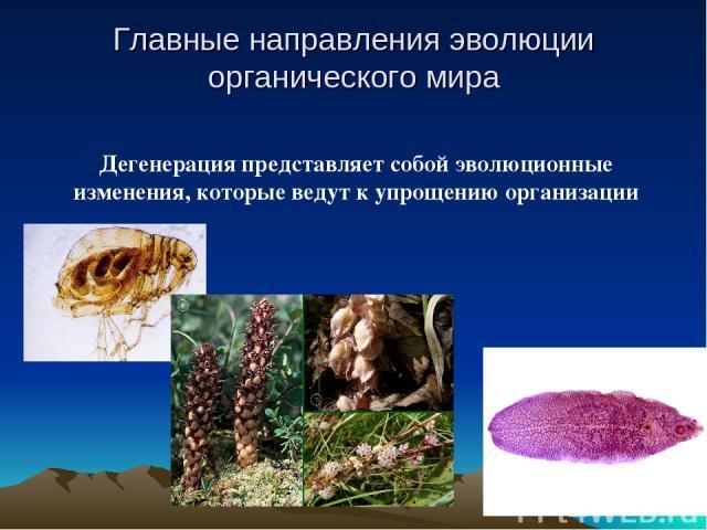 Дегенерация представляет собой эволюционные изменения, которые ведут к упрощению организации Главные направления эволюции органического мира