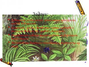 Задачи: Повторить особенности организации прокариот, грибов, водорослей; Закрепи