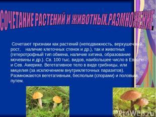 Сочетают признаки как растений (неподвижность, верхушечный рост, наличие клеточн