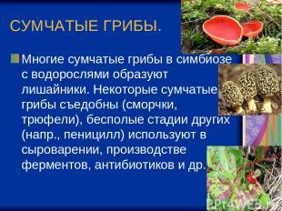 СУМЧАТЫЕ ГРИБЫ. Многие сумчатые грибы в симбиозе с водорослями образуют лишайник