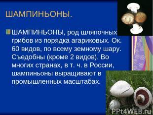 ШАМПИНЬОНЫ. ШАМПИНЬОНЫ, род шляпочных грибов из порядка агариковых. Ок. 60 видов