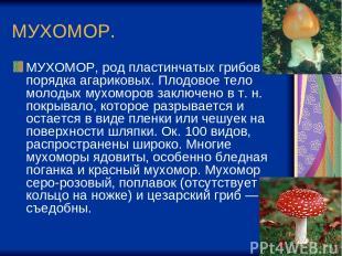 МУХОМОР. МУХОМОР, род пластинчатых грибов порядка агариковых. Плодовое тело моло