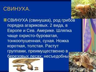 СВИНУХА. СВИНУХА (свинушка), род грибов порядка агариковых. 2 вида, в Европе и С