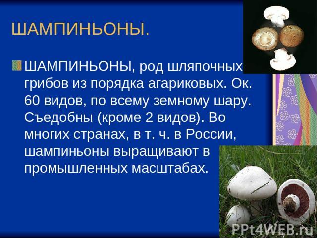 ШАМПИНЬОНЫ. ШАМПИНЬОНЫ, род шляпочных грибов из порядка агариковых. Ок. 60 видов, по всему земному шару. Съедобны (кроме 2 видов). Во многих странах, в т. ч. в России, шампиньоны выращивают в промышленных масштабах.