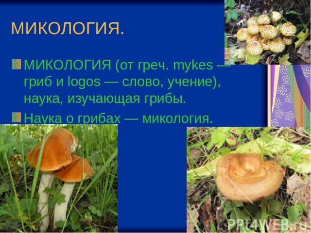 МИКОЛОГИЯ. МИКОЛОГИЯ (от греч. mykes — гриб и logos — слово, учение), наука, изучающая грибы. Наука о грибах — микология.