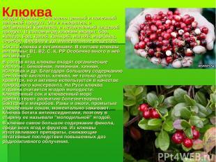 Клюква Ягоды клюквы – это очень ценный и полезный пищевой продукт. Это и лекарст